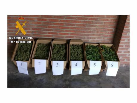 La Guardia Civil incauta 30 kilos de marihuana en Polán