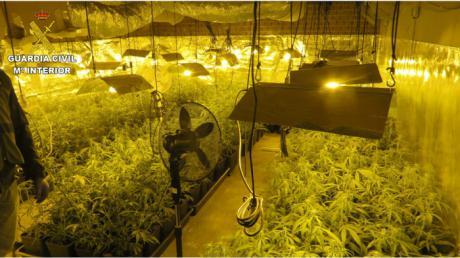 Detenidas dos personas y desmantelado un cultivo intensivo de marihuana en El Casar de Escalona