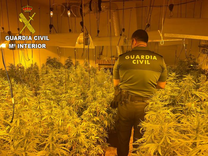 La Guardia Civil ha desmantelado una nueva plantación en San Martín de Pusa