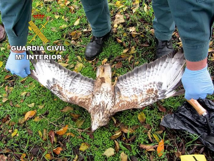 La Guardia Civil detiene a una persona por matar con veneno a dos ejemplares de águila.