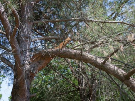 Muere un hombre de 67 años al caerle una rama de un árbol