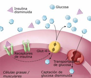 La Consejería de Sanidad forma a una treintena de pacientes y profesionales en el manejo de la diabetes tipo I