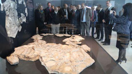 Jornadas de puertas abiertas en el Museo de Paleontología para dar a conocer sus nuevos contenidos