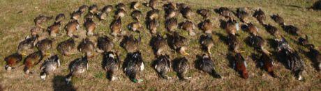 Dos detenidos y cuatro investigados por caza furtiva y por la comercialización de la carne obtenida sin cumplir normas sanitarias