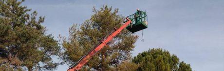 Solicitan a Mariscal los informes técnicos que avalan la tala de pinos en el colegio de Fuente del Oro