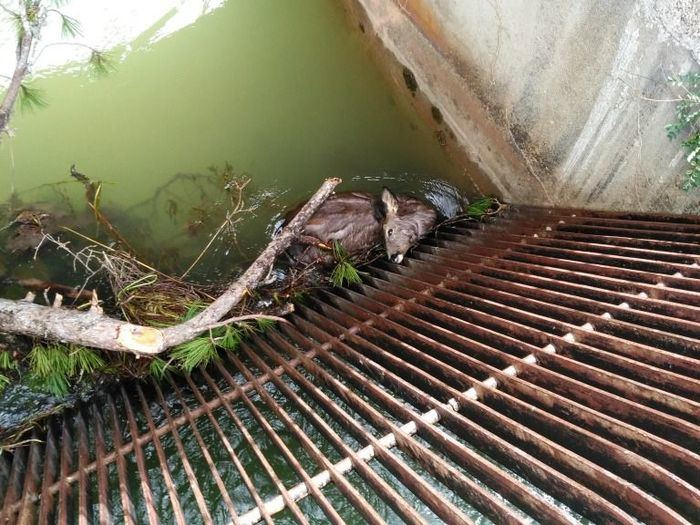 Aparecen animales muertos en el canal entre La Toba y Villalba de la Sierra