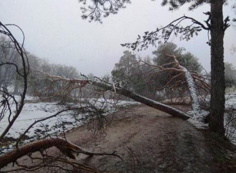 TRAGSA trabaja ya para paliar los efectos de la nevada de abril en la Serranía