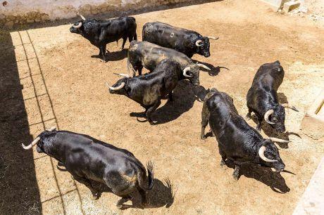 Dos toros de Román Sorando completan el encierro de Montalvo