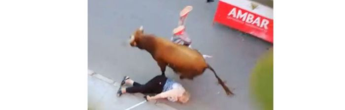 Un toro se escapa del encierro de Arcas y arrolla a dos mujeres