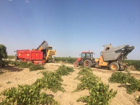 Castilla-La Mancha ha abonado esta semana 4,5 millones de euros a los viticultores por pagos de reestructuración de viñedo