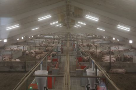 El Instituto Geológico estudiará los efectos de las granjas porcinas en la provincia