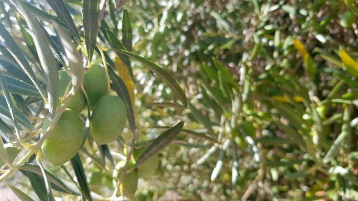 Castilla-La Mancha abona este viernes 22,5 millones de euros de ayudas a agricultores y ganaderos, 9 de ellos para los de ecológica