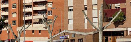 """El Plan de Podas municipal avanza """"priorizando la seguridad ciudadana evitando peligros de caída o fractura de ramas"""""""