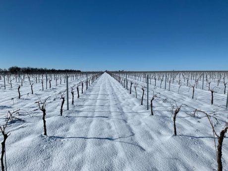 Ampliación de plazo para comunicar daños por heladas de invierno