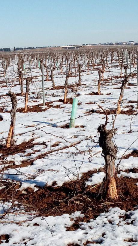 ASAJA califica como muy insufientes las medidas para paliar los daños de Filomena en el sector agropecuario