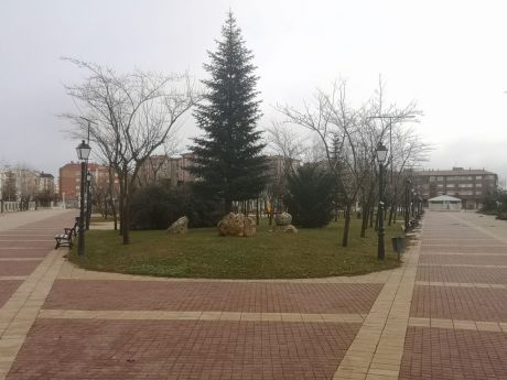 El Ayuntamiento de Tarancón reafirma su compromiso de plantar 100 de árboles por el centenario más 20 por cada árbol talado