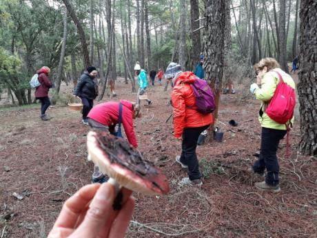 Los conquenses disfrutan de una ruta guiada micológica