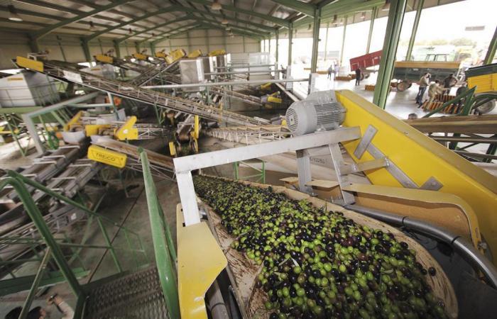 El aceite de oliva recoge nuevas subidas de precio esta semana