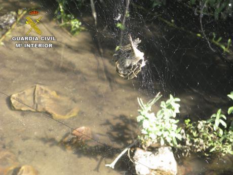 La Guardia Civil investiga a una persona por capturar aves fringílidas utilizando métodos prohibidos