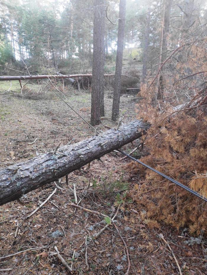 El PP denuncia que el Ayuntamiento de Las Majadas todavía no ha retirado los árboles caídos después del temporal del mes de abril