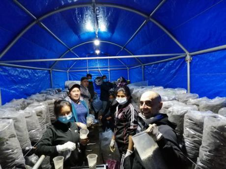 Finaliza con gran éxito el proyecto piloto de cultivo de champiñón impulsado por ADIMAN en Bolivia