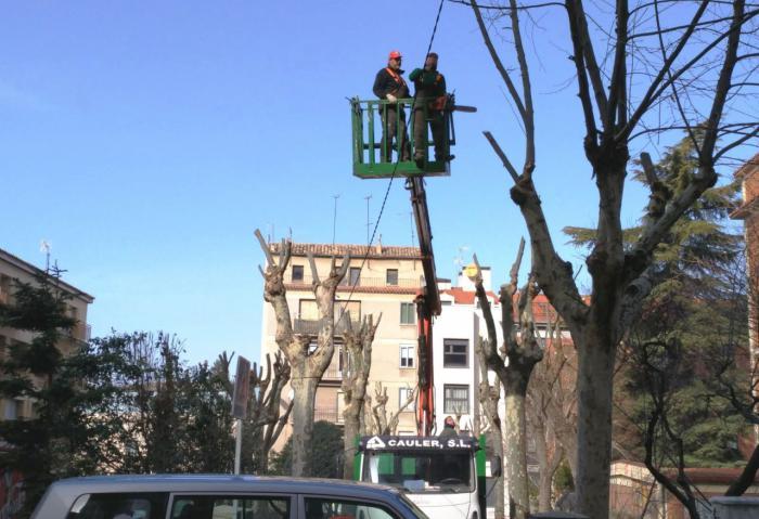El Ayuntamiento lleva a cabo la campaña de poda de 35.000 árboles de la ciudad y pedanías