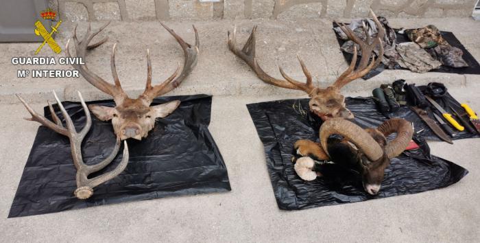 Se investiga a dos personas por caza furtiva en La Iglesuela