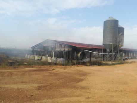 Unos 40.000 pollos mueren en el incendio de una nave en Villanueva de la Jara