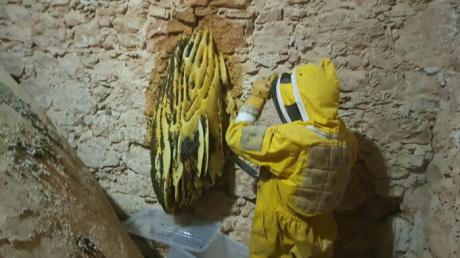 Retiran un gran enjambre de abejas de la iglesia de Villagarcía del Llano