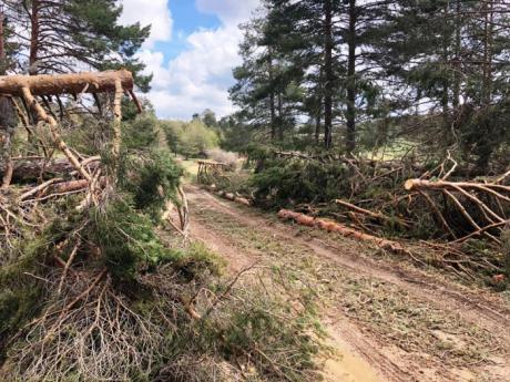 """Salmerón: """"Gracias a las denuncias del PP, el Ayuntamiento de Las Majadas finalmente realizará un aprovechamiento forestal extraordinario"""""""
