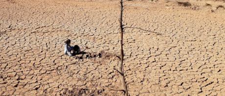 La UCLM participa en un estudio internacional que evalúa la restauración de zonas áridas en todo el mundo