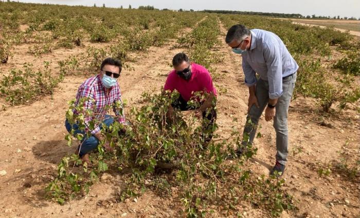 La Junta reafirma su compromiso con el sector agrícola tras las consecuencias que ha ocasionado la DANA a su paso por la provincia