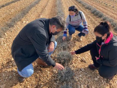 Más de 610 jóvenes se han incorporado a la agricultura en la provincia de Cuenca