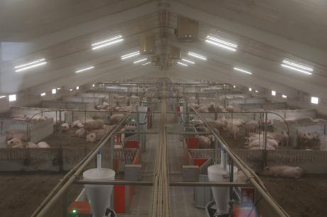 ICPOR promueve en Zarzuela una de las granjas porcinas más modernas de España