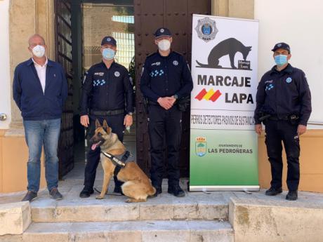 Presentado en Las Pedroñeras, 'Blade', el nuevo integrante de la policía local para la prevención y detección de drogas