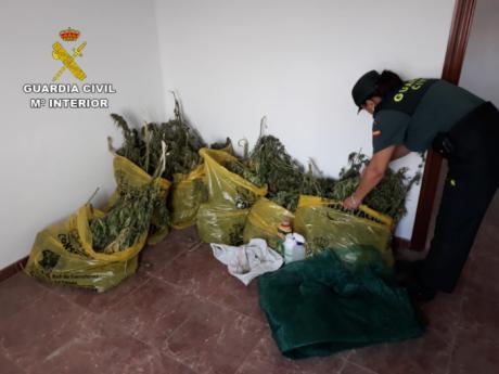 La Guardia Civil investiga a dos personas por cultivo de drogas en