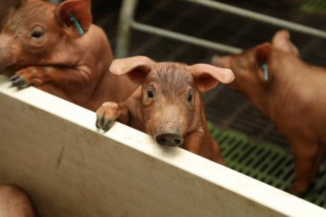Una granja de ICPOR reconocida como 'Mejor explotación ganadera' en la V Edición de los premios Surcos