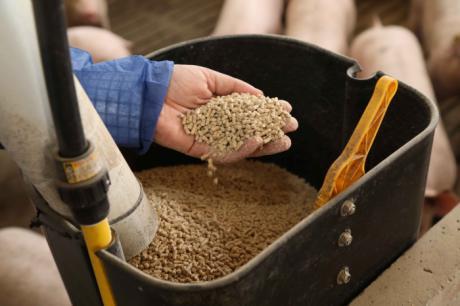ICPOR refuerza su compromiso con la calidad y renueva la certificación de trazabilidad en sus granjas