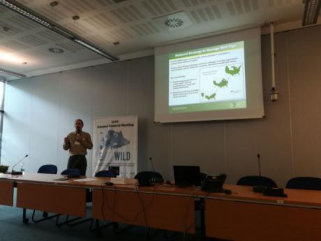 El IREC coordina el debate europeo sobre las prácticas de recopilación de datos sobre la abundancia y distribución del jabalí