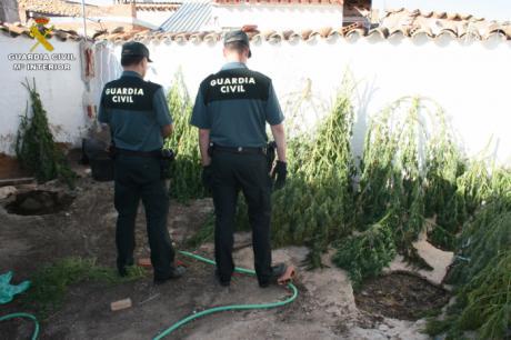 Detenida una persona e investiga a otra por cultivo de marihuana en la localidad de Casasimarro
