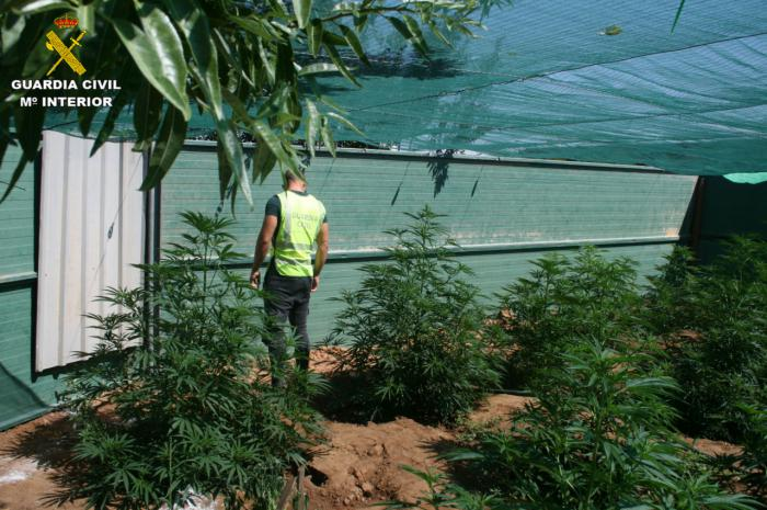 Detenidas dos personas e investiga a otra por cultivo de drogas en las inmediaciones de la localidad de Arcas