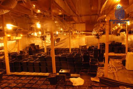 Desmantelan una plantación de marihuana en una nave industrial en la capital