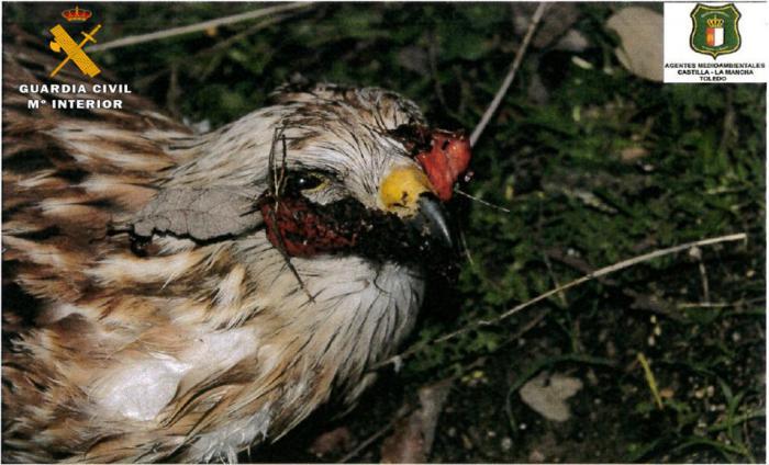 La Guardia Civil investiga a una persona por envenenamiento de fauna protegida