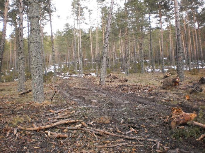 El Juzgado de Primera Instancia archiva la causa por la tala de árboles en la Serranía de Cuenca
