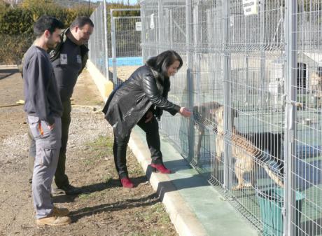 El Albergue Provincial de Animales de la Diputación despide el año 2017 con un total de 61 perros adoptados