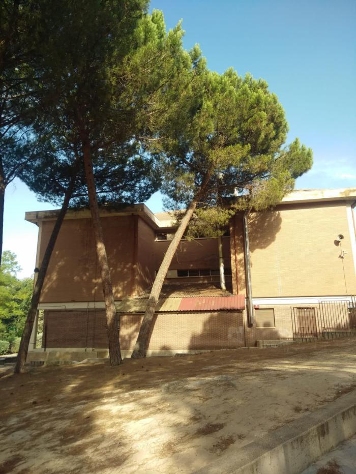 El Ayuntamiento corta los pinos del patio de Educación Infantil del colegio Fuente del Oro por riesgo de caída