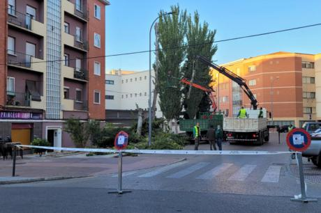 El Ayuntamiento actúa sobre el arbolado de la ciudad para garantizar la seguridad de la ciudadanía