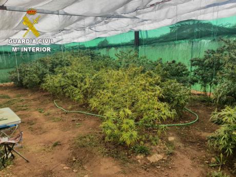 Investigan a dos personas por un delito de cultivo y elaboración de drogas tóxicas
