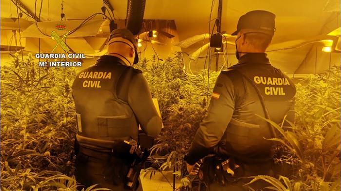 """Se desmantela una plantación """"indoor"""" de cannabis sativa"""