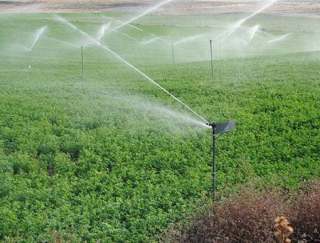 La reducción del agua para regar en muchas zonas de la región supondrá una importante merma en la producción de los cultivos sociales